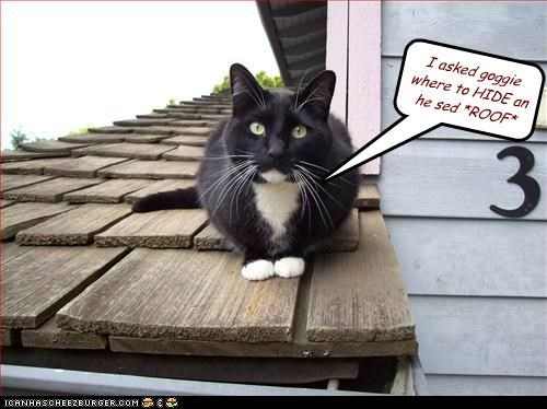 answer,asked,caption,captioned,cat,dogs,goggie,hid,pun,question,roof,sound,where
