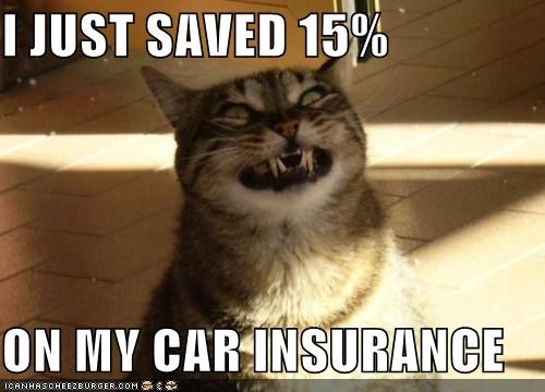 animals car insurance cars Cats driving GEICO I Can Has Cheezburger insurance scary smiling - 5180182272