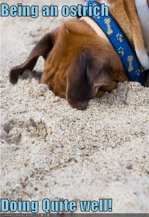 dogs doing quite well actually head in the sand i has a hotdog ostrich ostriching - 5180491008