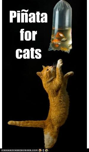 bag caption captioned cat Cats do want equivalent fish for pinata playing reaching - 5180547072