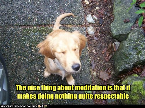 The nice thing about meditation is that it makes doing nothing quite respectable