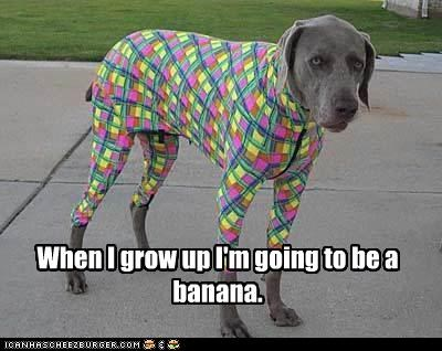 ambitions animals bananas dogs dreams dressed up i has a hotdog when I grow up wtf - 5180701952