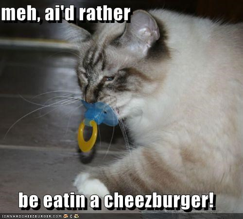 Cheezburger Image 5180766720