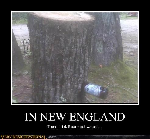 beer new england Pure Awesome trees