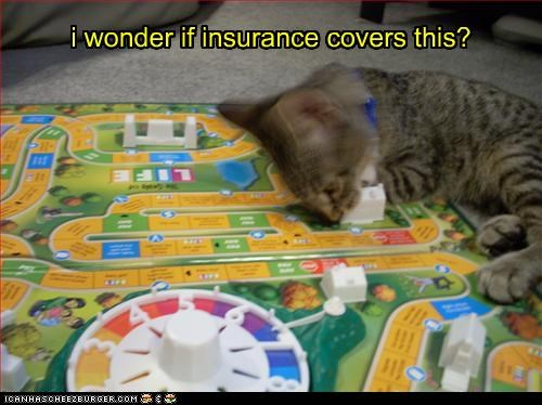 board game,caption,captioned,cat,cover,coverage,covering,game,insurance,life,question,this,wonder,wondering