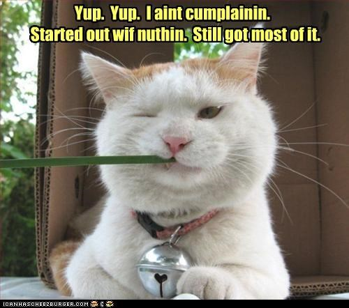 best of the week,caption,captioned,cat,chewing,grass,Hall of Fame,have,most,nothing,punchline,started,still,yokel
