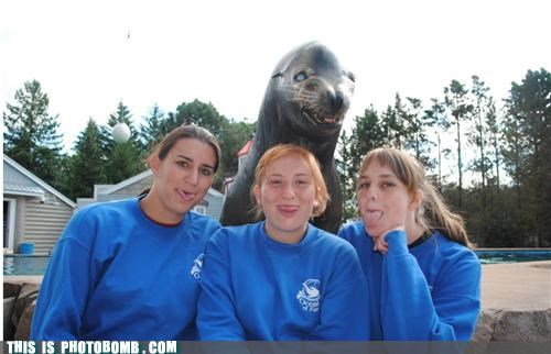 Animal Bomb,girls,i seal you,pool,seal,sticking tongue out