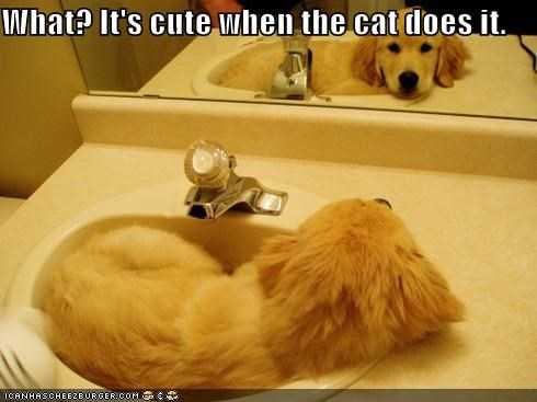 bathroom golden retriever mirror puppy sink sleeping in the sink - 5182003456
