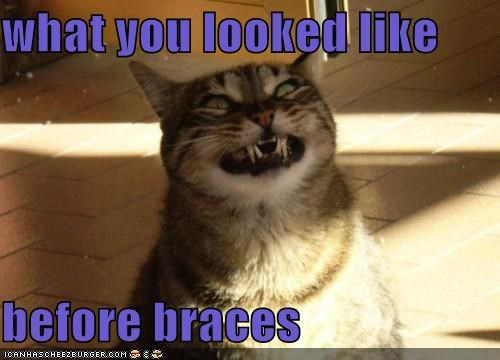animals,braces,Cats,I Can Has Cheezburger,mean,smiles,smiling,teeth