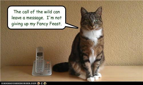 call,can,caption,captioned,cat,concession,do not want,fancy feast,give up,giving up,leave,message,noms,not,phone,refusing,wild