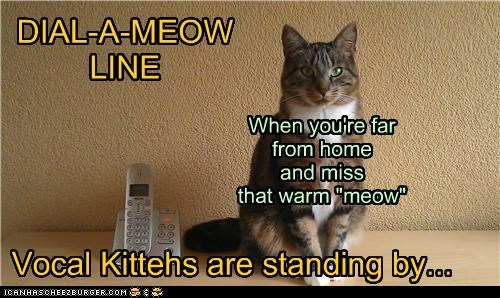 """DIAL-A-MEOW LINE When you're far from home and miss that warm """"meow"""" Vocal Kittehs are standing by..."""