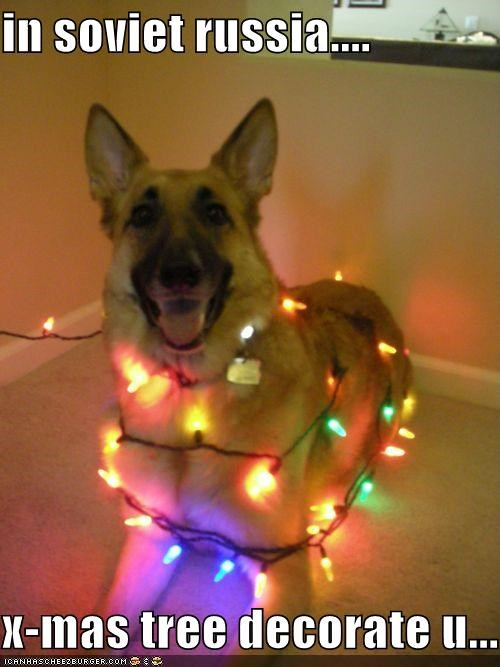 christmas,christmas lights,christmas tree,german shepherd,happy dog,silly dog,smiling,Soviet Russia