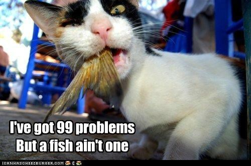 99 problems aint caption captioned cat eating fish Jay Z lyric nomming noms one tail - 5182696704