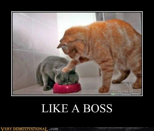 cat head Like a Boss Pure Awesome push - 5183004416