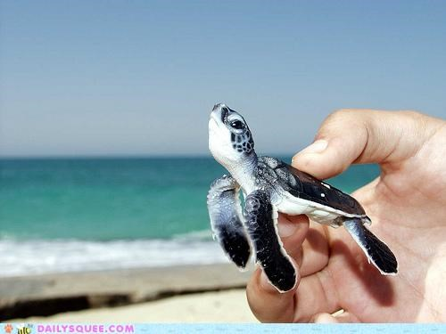 acting like animals airborne annoyed baby determined do not want Hall of Fame human optimistic pragmatic sea turtle steadfast swimming trying - 5183031552
