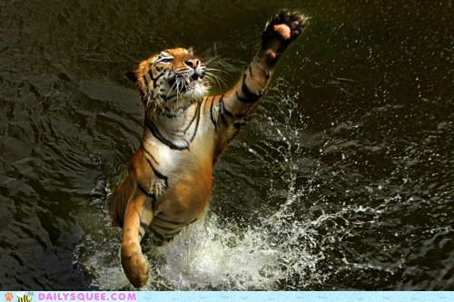 acting like animals,bluffing,calling,help,lying,motive,reaching,swimming,tiger,water