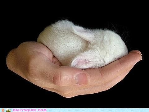 baby brain bunny confused Hall of Fame hand handheld holding idiom lolwut mush rabbit sleeping squee overload tiny