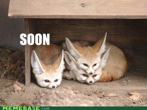 animals animemes family food foxes friends hens SOON - 5183124992