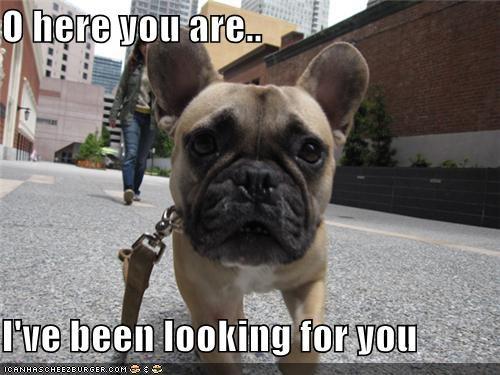 found you french bulldogs leash walk - 5183425024