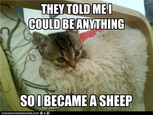 anything be became caption captioned cat could cuddling cushion fur hiding me meme sheep snuggling told - 5183666432