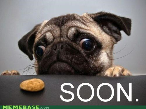 cookies dogs food good boy SOON treat - 5183924736