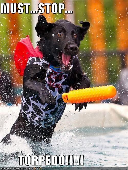 happy dog labrador retriever playing swimming torpedo toy toys water - 5183983616
