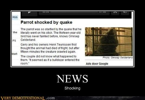 earthquake shocking hilarious news parrot - 5184116992