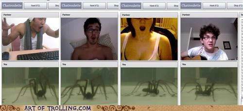 Chat Roulette ick scary spiders - 5184230656