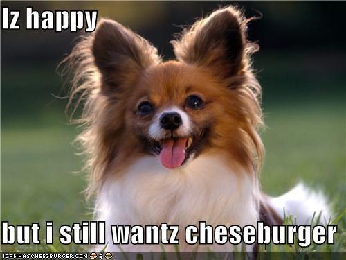 Cheezburger Image 5184472832