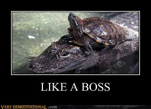 animals,crocodile,hilarious,Like a Boss,turtle