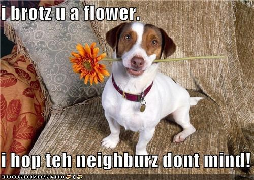 i brotz u a flower. i hop teh neighburz dont mind!