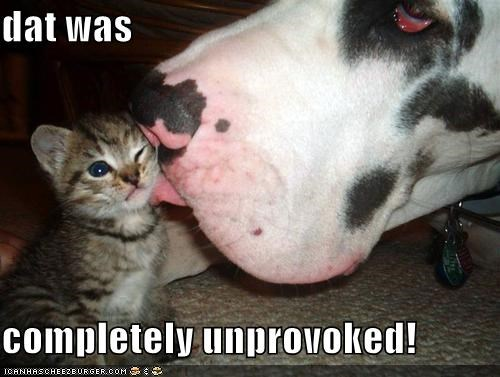 attack cat family friends friendship great dane KISS kitten love