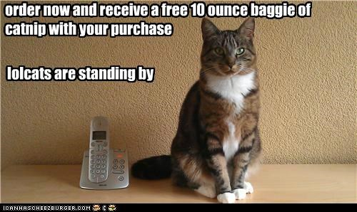order now and receive a free 10 ounce baggie of catnip with your purchase lolcats are standing by
