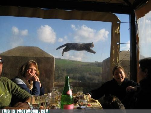 Animal Bomb,best of week,cat,hanging out,jump,Perfect Timing