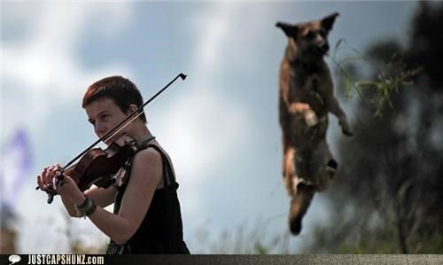 animals caption contest dogs is it real jumping Music recital violins wtf - 5185394432