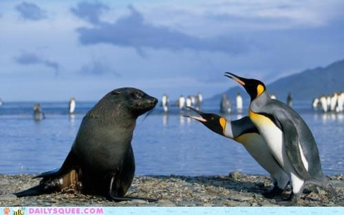 acting like animals,arguing,beach,dispute,fighting,penguin,penguins,private property,sea lion,shouting,upset