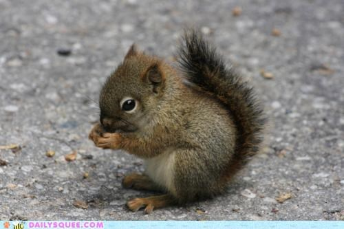 baby do want food gluttonous Hall of Fame hungry mouth nibble nibbling nom nomming omnomnom small squirrel - 5185626368