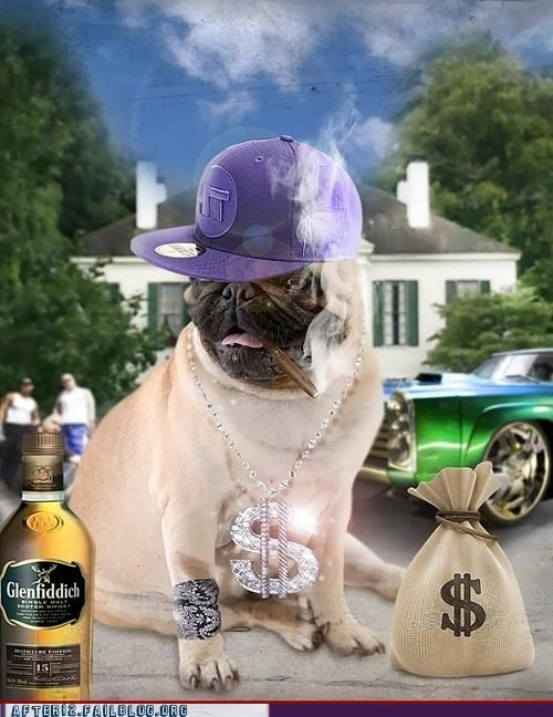 drinking,mind on my money,pug,smoking,thug life