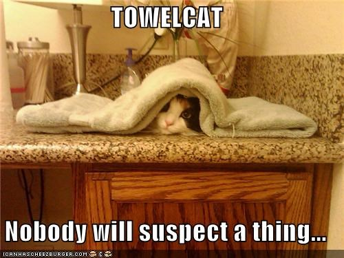 caption captioned cat hiding nobody suspect thing towel will - 5186021888