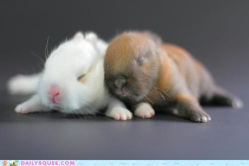 bunnies bunny cuddling edna-st-vincent-millay first fig friend friendship Hall of Fame happy bunday parody poem rabbit rabbits sleeping - 5186040320