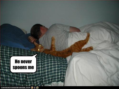 animals,beds,Cats,I Can Has Cheezburger,sleeping,spooning,spoons