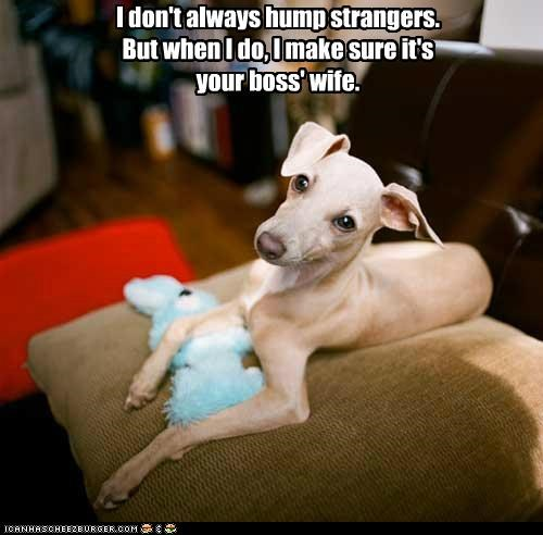 animals dogs humping i dont always i has a hotdog Memes the most interesting man in the world wives - 5186321408