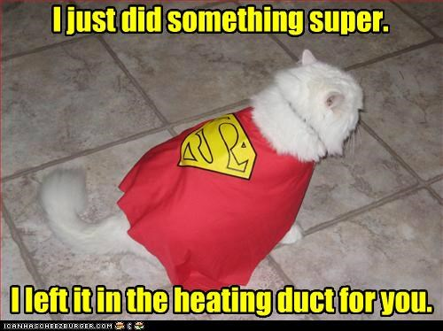 cape caption captioned cat costume did dressed up duct for heating just left location something Super superman you