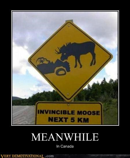 Canada,hilarious,invincible,Meanwhile,moose,sign