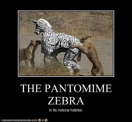 THE PANTOMIME ZEBRA in its natural habitat.