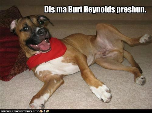 burt reynolds impression mixed breed pit bull pitbull - 5188073472