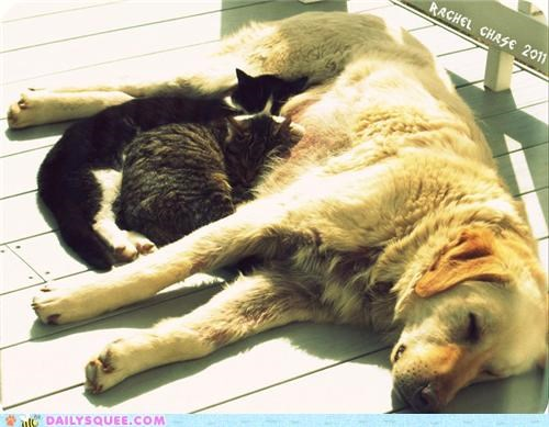 cat Cats cuddling friends friendship Interspecies Love love reader squees - 5188167168