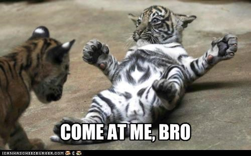 Babies baby caption captioned come at me come at me bro cub cubs meme tiger tigers