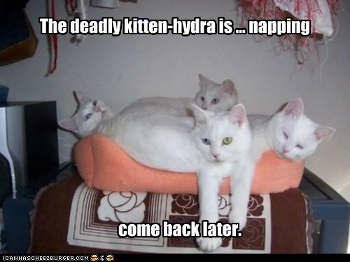 back caption captioned cat Cats come deadly hydra kitten later napping