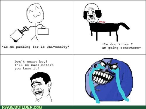 college,dogs,i lied,pets,Rage Comics,Sad